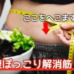 下腹が痩せる筋トレ講座!|ぽっこり脂肪を一ヶ月で撃退せよ!