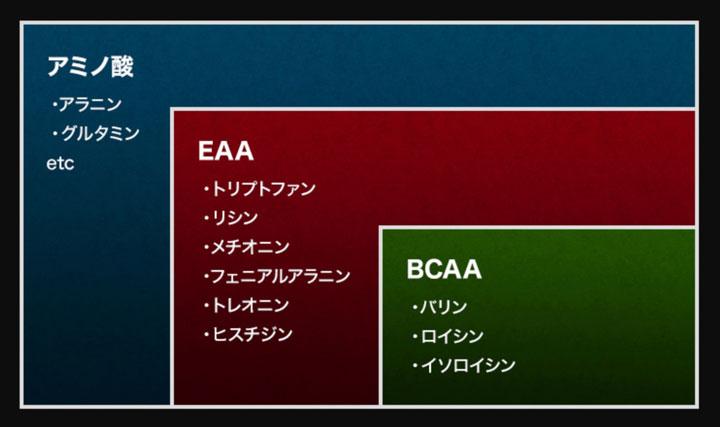 BCAAとEAAの関係性